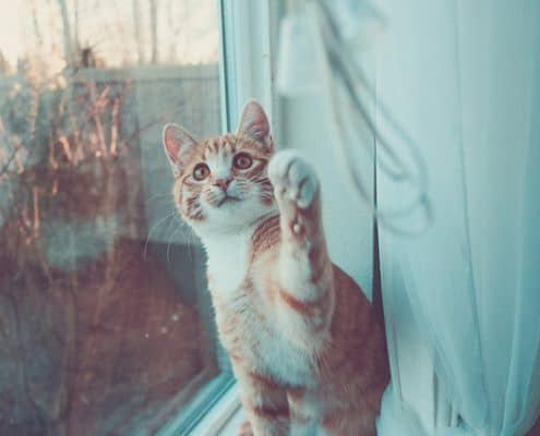 Gioco nel gatto dal gattino al gatto adulto