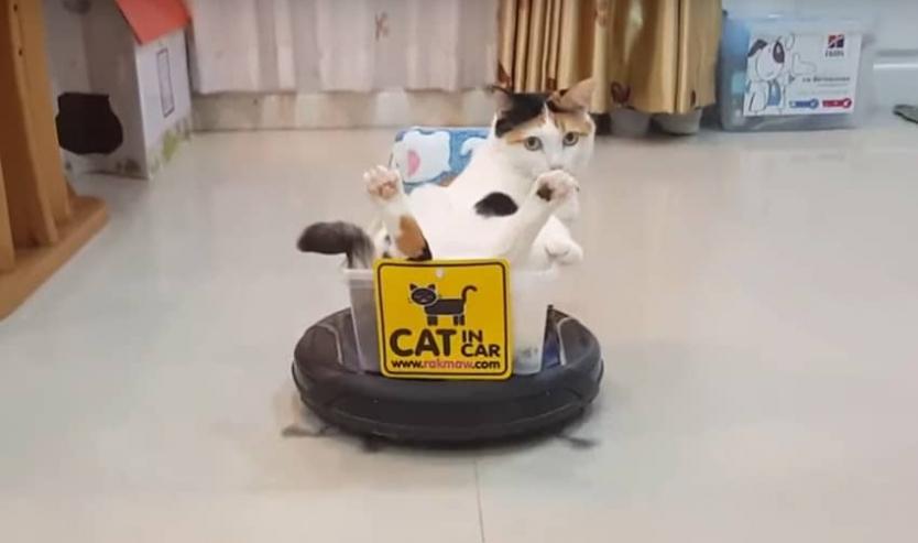 Miglior Robot aspirapolvere per peli animali