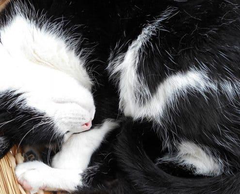 Miglior cuccia per gatti quale scegliere