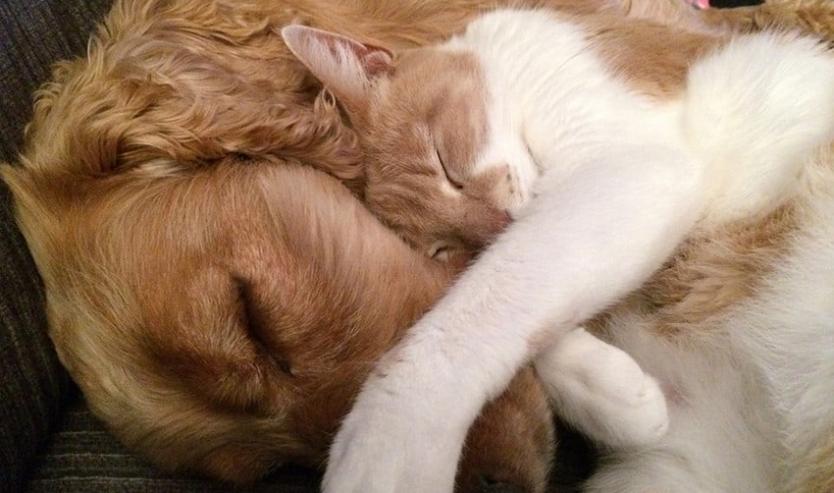 alimentazione casalinga del gatto va bene anche per il cane
