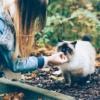 cosa dar da mangiare ai gatti