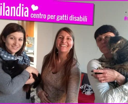 disabilandia centro per gatti disabili a rovigo