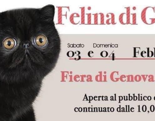 expo felina genova 2018 anfi