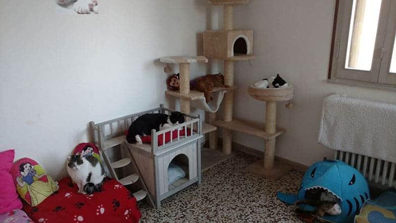 gatti disabili a rovigo