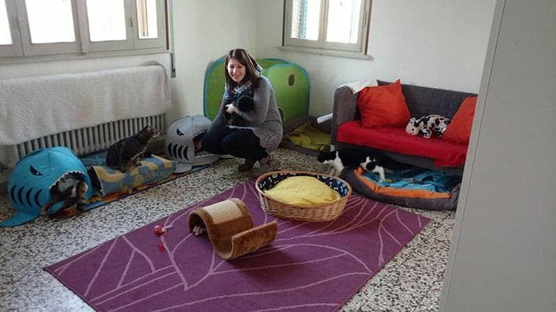 gatti disabili centro disabilandia