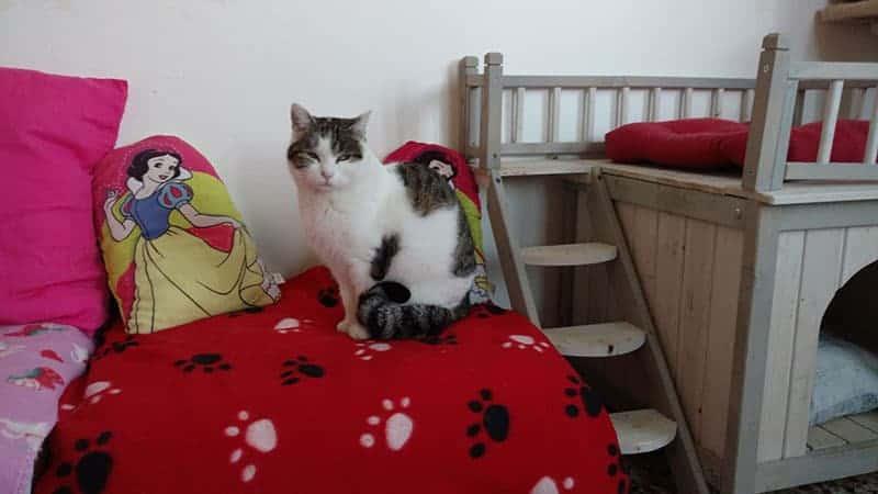 gatti disabili oipa rovigo