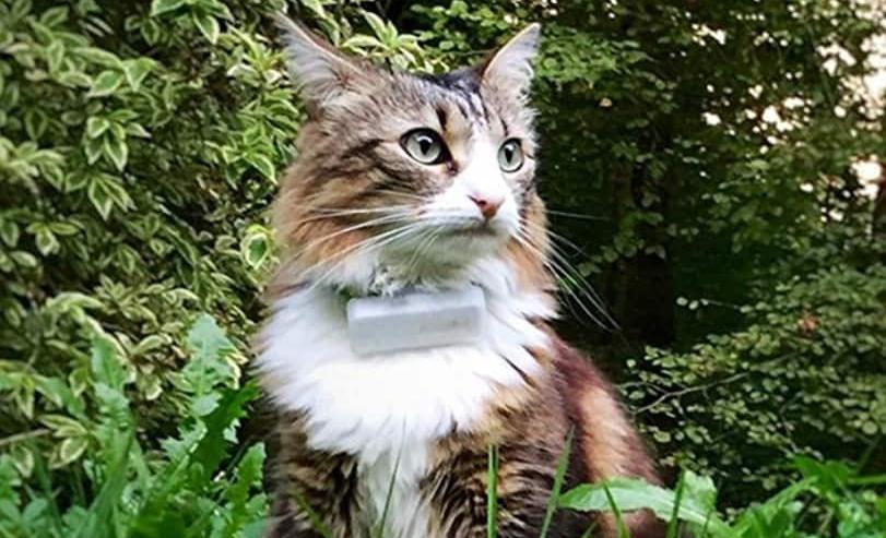 localizzatore GPS per gatti