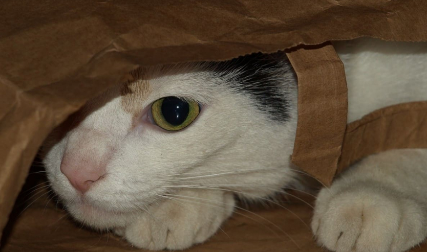 non dire gatto se non ce l hai nel sacco