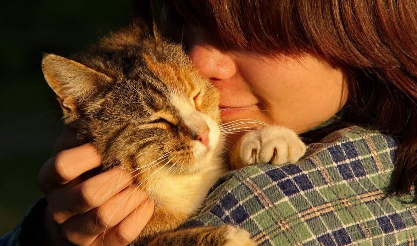 Adottare un gatto informazioni e consigli per orientarti