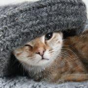 Perché il gatto mangia la lana cos'è il picacismo