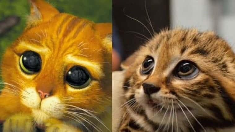 gatto con gli stivali occhioni drogon