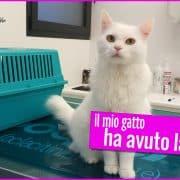 gatto con la parvovirosi veterinario consigli