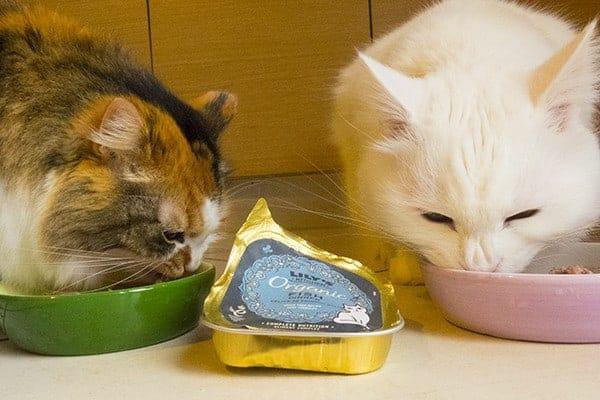 ricette lily s kitchen gatto
