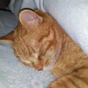 Anestesia gatto effetti collaterali e risveglio