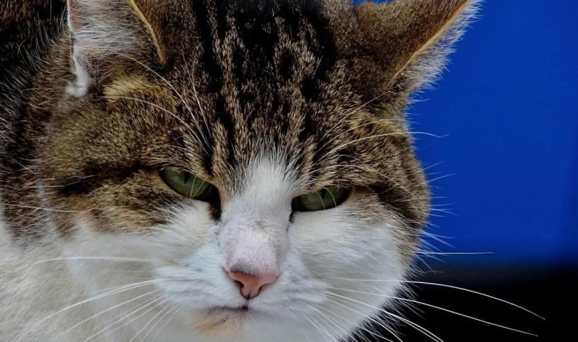 Calicivirus felino terapia sintomi e contagio