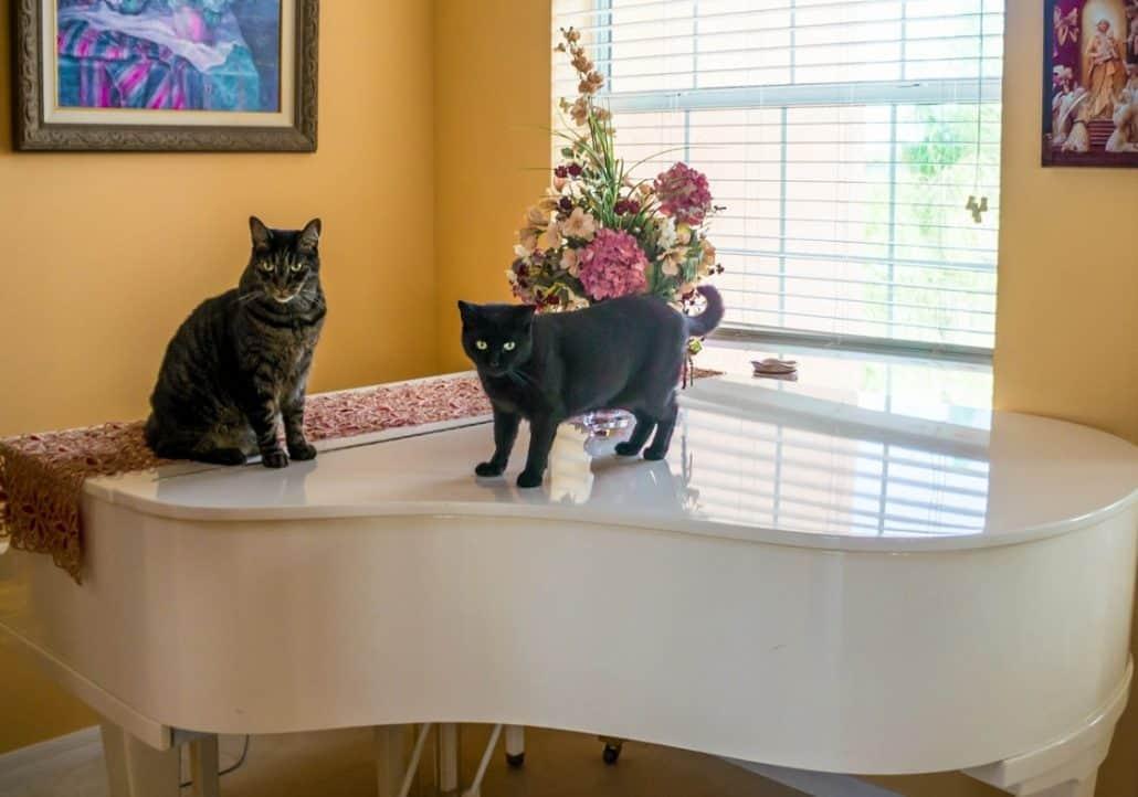 Casa a misura di gatto idee mobili e arredamento for Arredamento per gatti