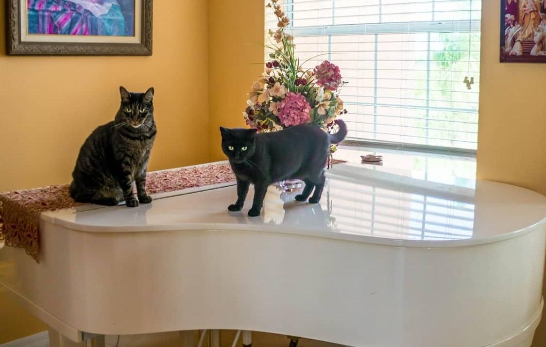 Cuccia Gatto Fai Da Te casa a misura di gatto: idee mobili e arredamento