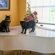 Casa a misura di gatto idee mobili e arredamento