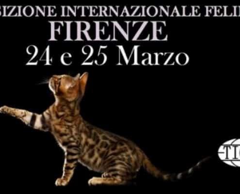 Expo Internazionale felina TICA Firenze 2018