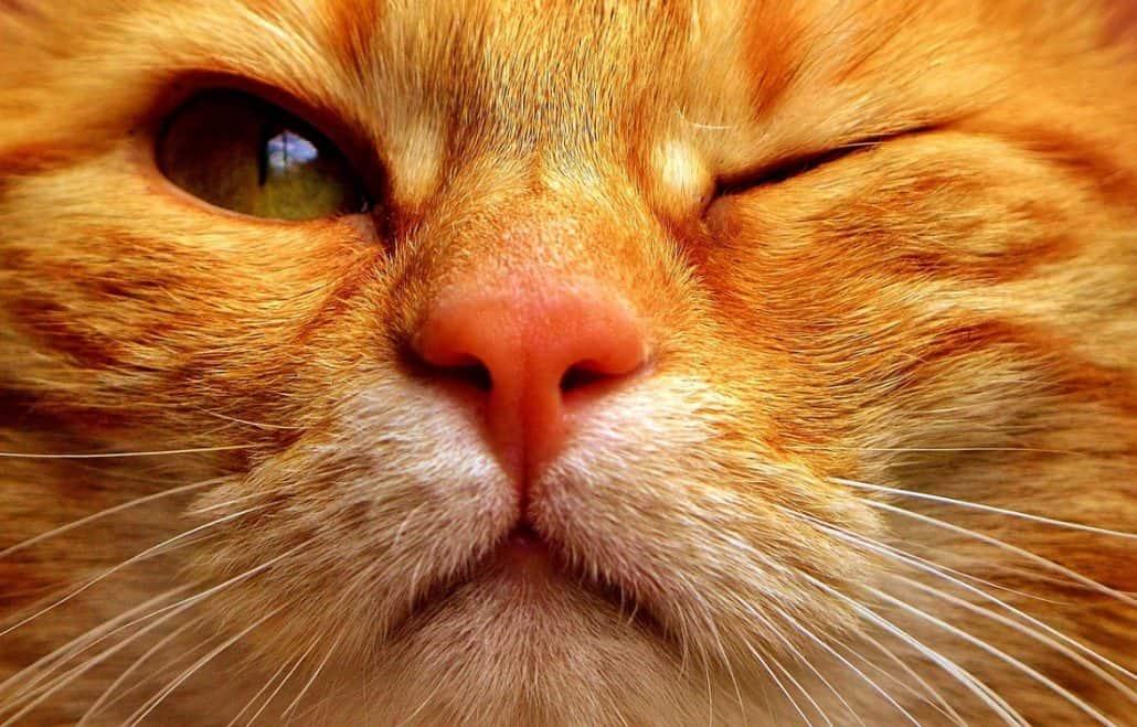 micio con grande labbra Milf porno su Tumblr