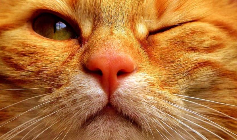 Herpesvirus gatto sintomi rimedi cura