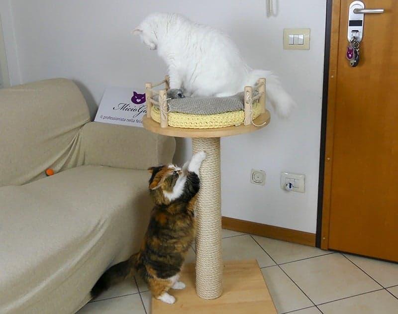cat tree tiragraffi per gatti
