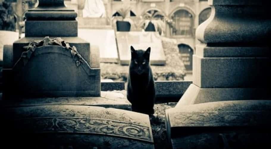 citta dei gatti rassegna gatti roma milano 2018