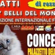 esposizione felina concesio 2018