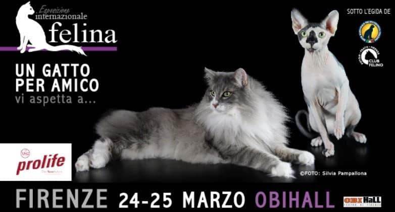 esposizione felina enfi toscana firenze 2018