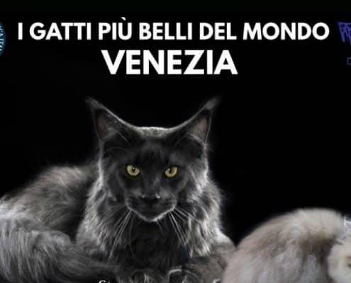 expo felina enfi venezia 2018