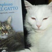 la complessa vita del gatto libro raffaella rizza