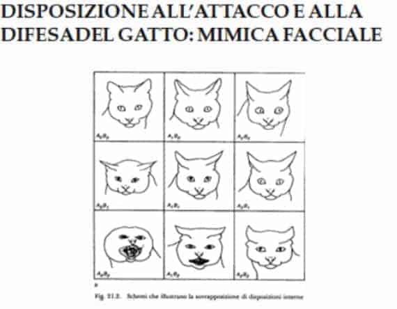 linguaggio dei gatti orecchie e testa