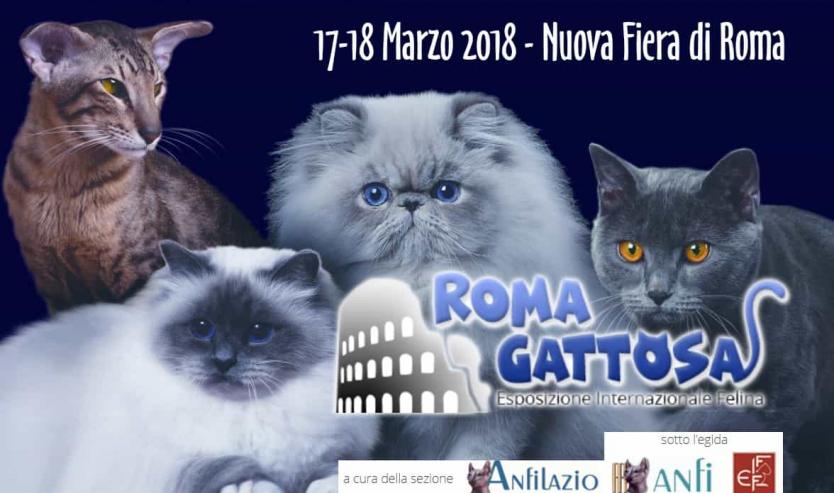 romagattosa esposizione felina roma 2018