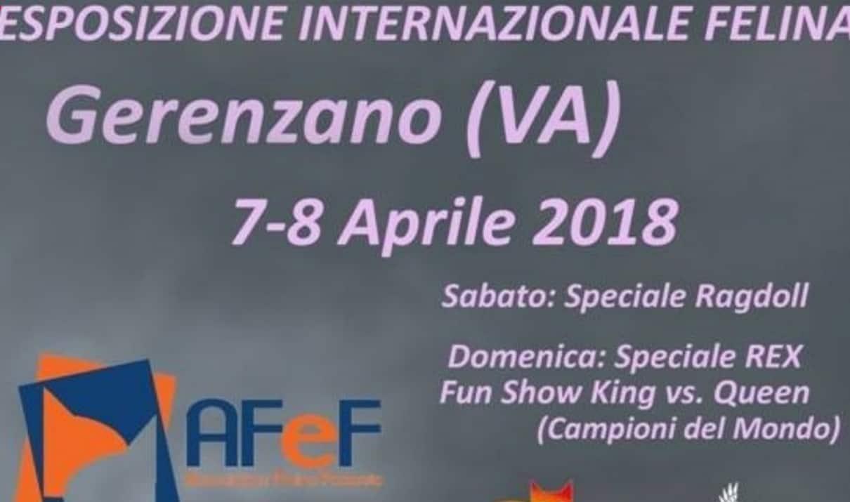 Esposizione Internazionale Felina Gerenzano 2018
