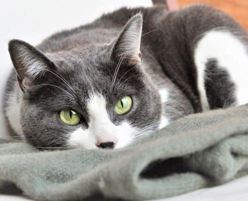 Post sterilizzazione gatta e castrazione gatto cosa fare