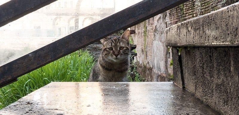 gatti di roma largo argentina