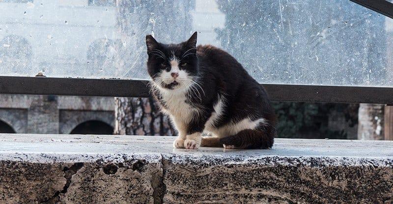 largo torre argentina gatti di roma