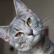 tutto sui gatti consigli informazioni