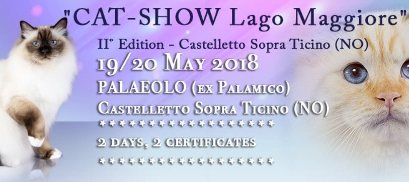 Esposizione Felina Lago Maggiore Cat Show 2018