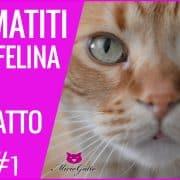 dermatiti gatto acne felina tigna veterinario