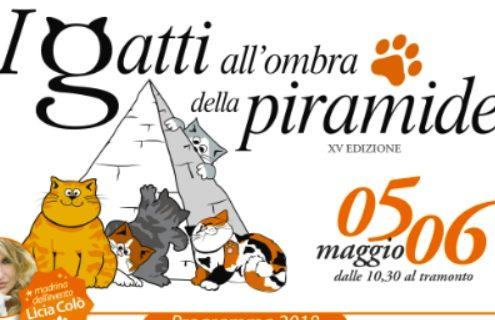 i gatti all obra della piramide 2018