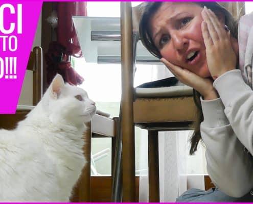 dermatite allergica da pulci gatto morso pulce