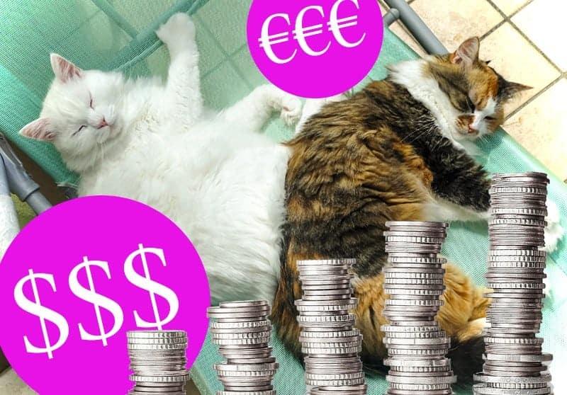 Quanto Costa Mantenere Un Gatto La Mia Esperienza Miciogattoit