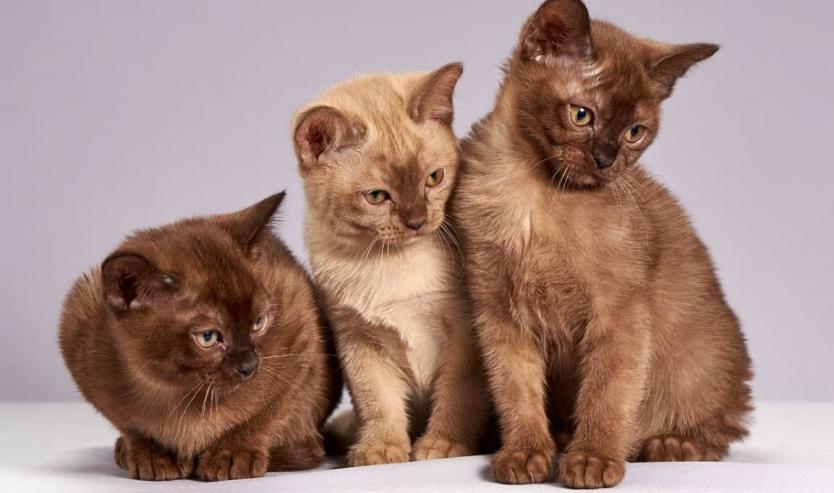 Evoluzione del gatto storia del gatto domestico e sua domesticazione