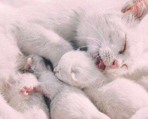 Gattini in adozione quando il distacco dalla madre