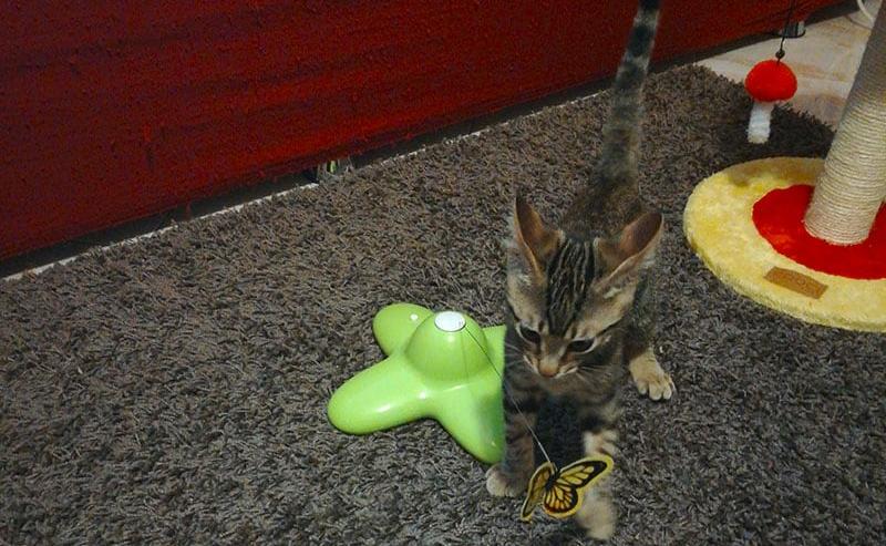 Gioco per gatti Funny Butterfly recensione