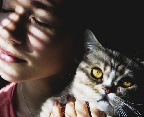 Malattie trasmesse dai gatti le zoonosi gatto uomo