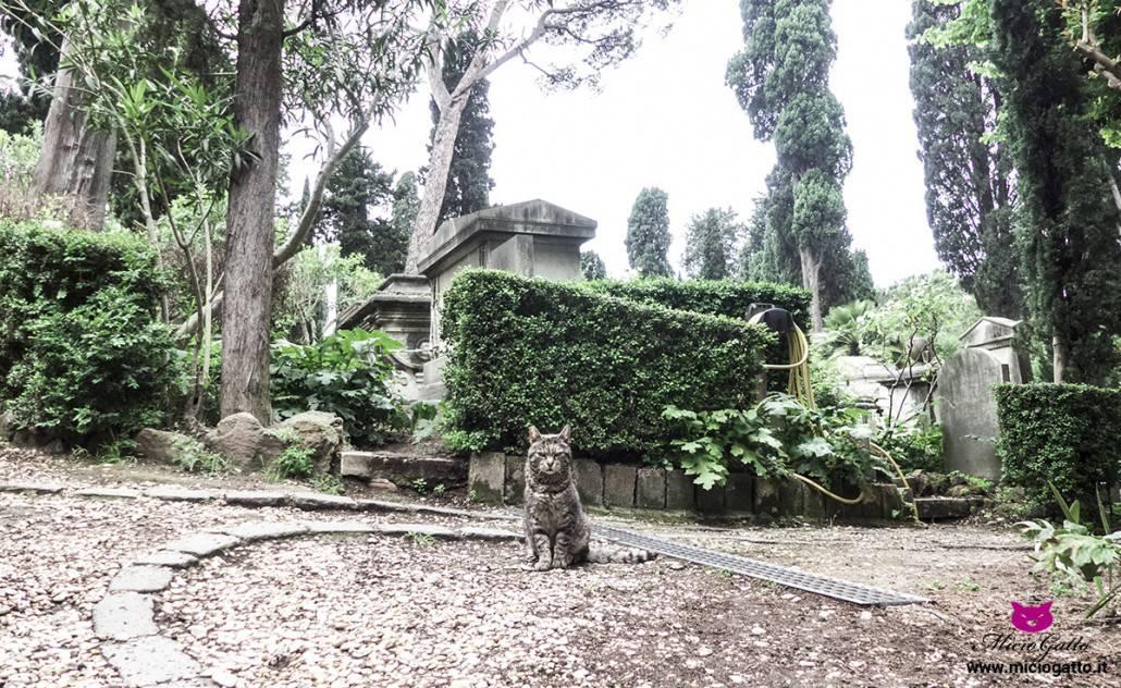 colinia felina piramide roma