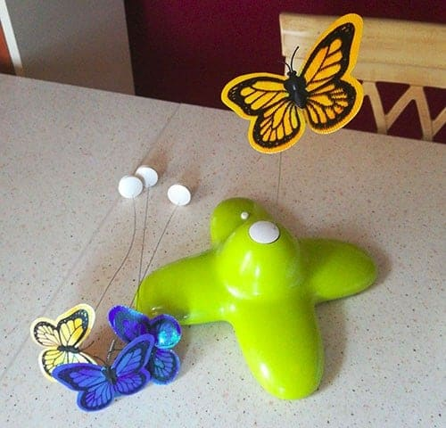 gioco con farfalla gatti