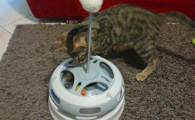 giostra per gatti Carosello Flashlight